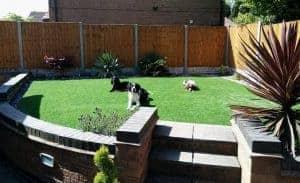 artificial-grass-direct-majestic-lawn