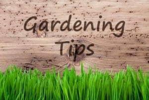 September gardening advice