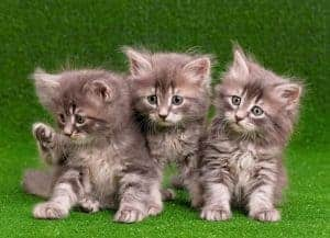 Artificial Grass For Cats